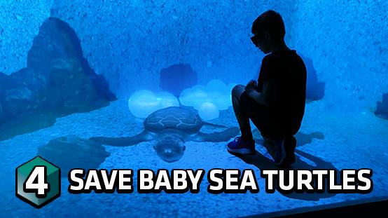 Help the baby sea turtles reach the ocean