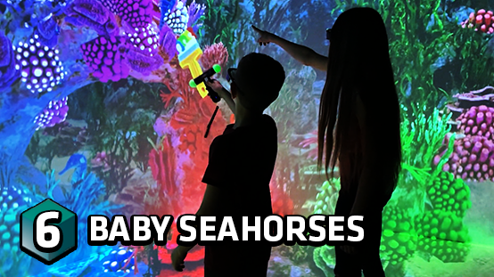 Help save the baby seahorses
